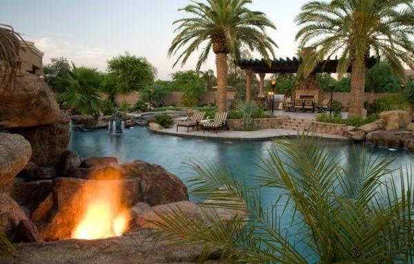 Add Tropical Charm Your Backyard Opting Palm Trees