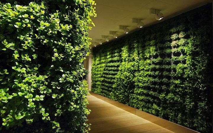 Alfa Img Showing Wall Plant