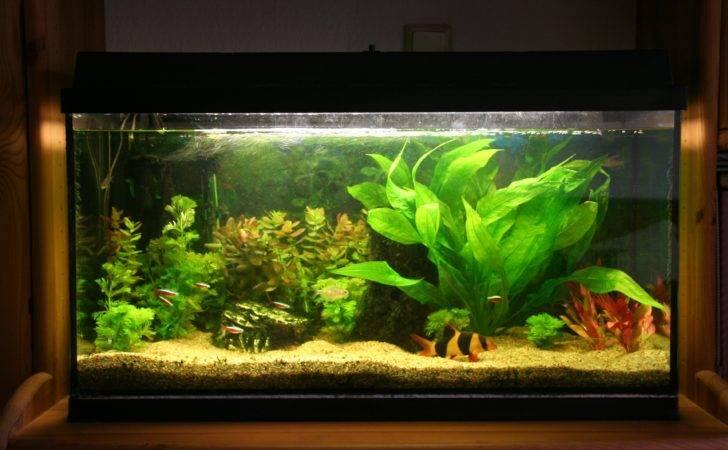 Amazing Fish Tanks Choosing Right Tank