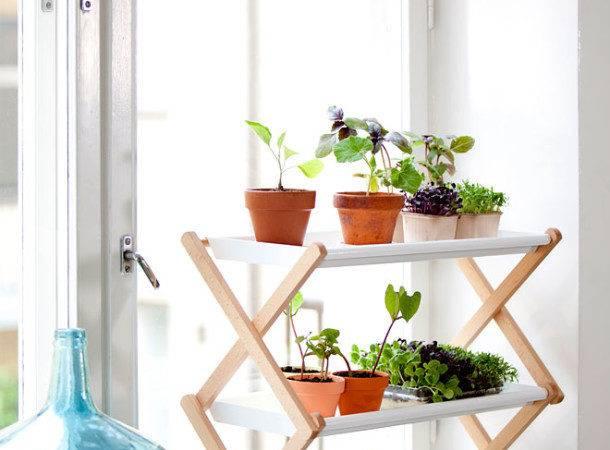 Amazing Interior Decorating Small Indoor Plants Window