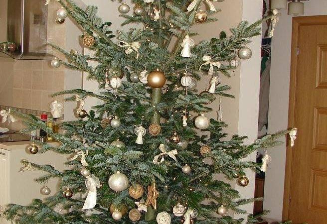 Amazing Life Christmas Trees Part Passion