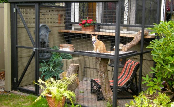 Animal Homes Pinterest Garden Oasis Chicken Coops Cat Houses