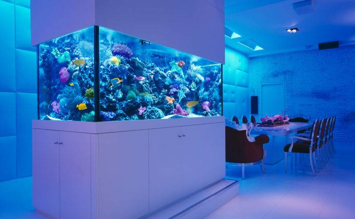 Aquarium Check Out These Rooms Stunning Aquariums