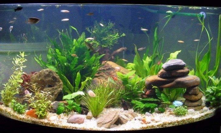 Aquarium Decoration Fish Exotic