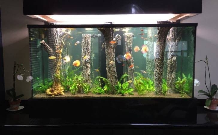 Aquarium Design Service Los Angeles Maintenance