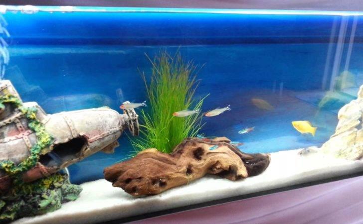 Aquarium Fish Tank Tropical Plasma Style Youtube