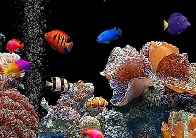 Aquarium Salt Water Fish Tanks Tropical Tank