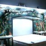 Aquarium Think Again Unusual Places Your Home Fish Tanks