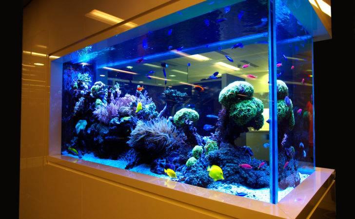 Aquariums Ponds Design Installation Best Delhi