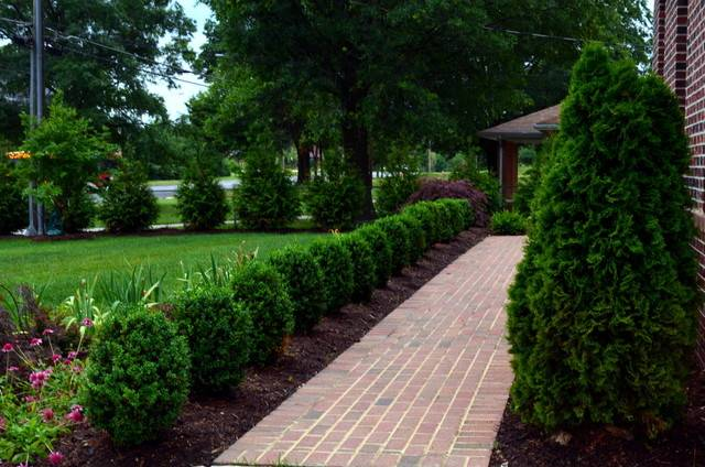 Arborvitae Landscaping Giant Screen
