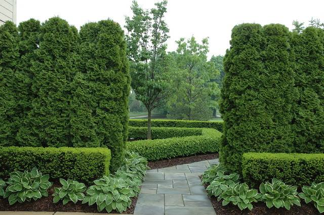 Arborvitae Landscaping Landscape Architects