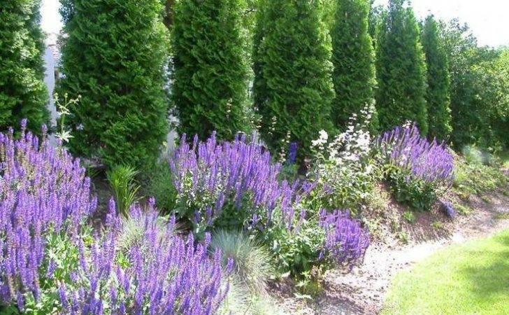 Arborvitae Landscaping