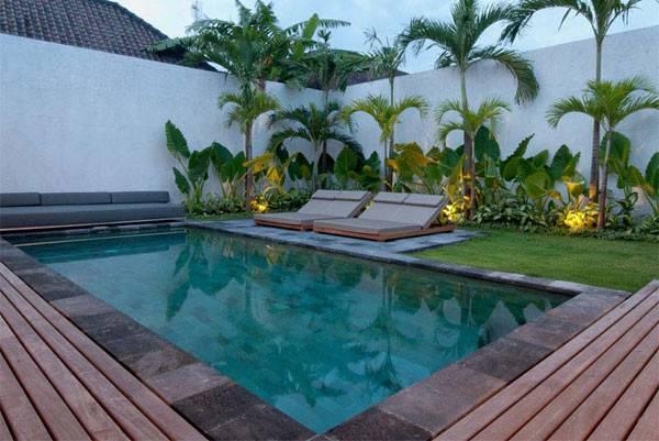 Around Pool Tropical Plants Modern Tropics Landscaping