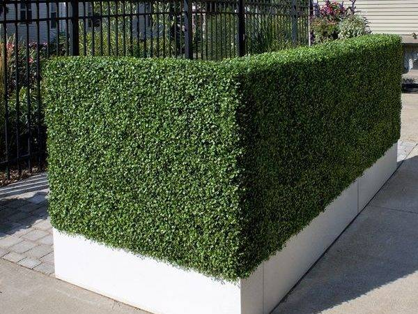 Artificial Outdoor Boxwood Hedge Home Infatuation