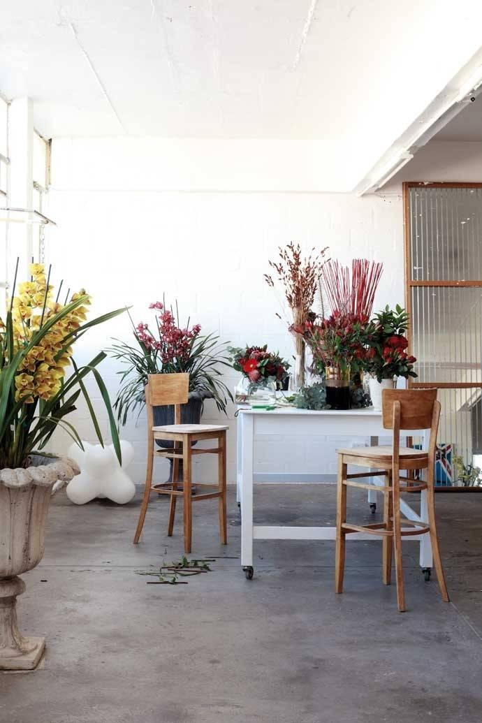 Australian Bachelor Pad Plants Pinterest