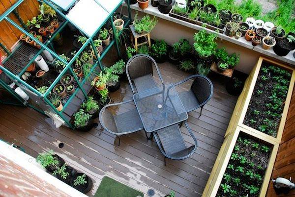 Back Balcony Gardens Prove Space Too Small Plants