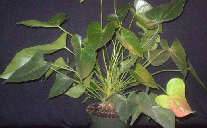Back Large Leaf House Plants Identification