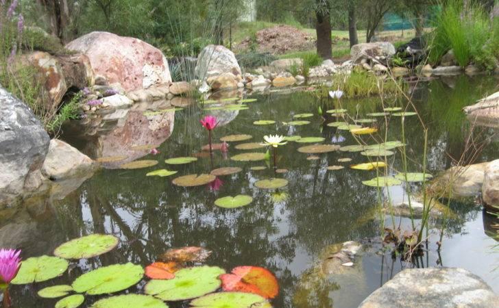 Backyard Fish Pond Philippines Adventure