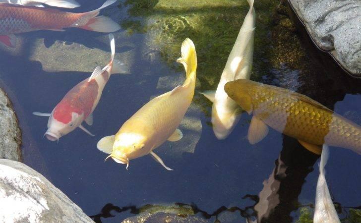 Backyard Fish Pond Philippines