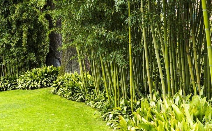 Backyard Privacy Best Plants Grow Bob Vila