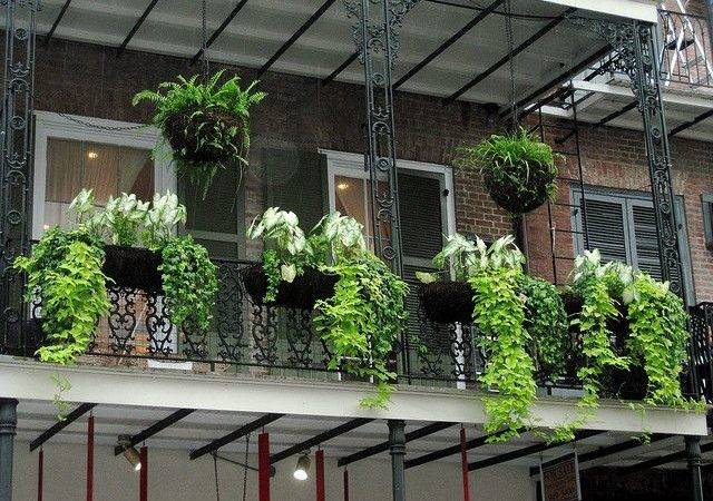 Balconies Terraces Plants Pinterest Balcony