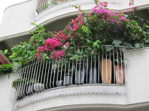 Balcony Overflows Bougainvillea Other Plants Tokyo Green