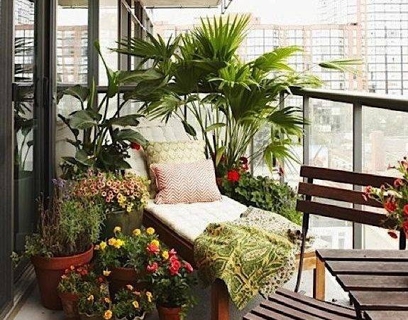 Balcony Urban Plants Privacy Condo