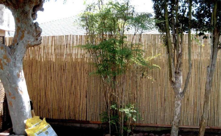 Bamboo Fence Yellow