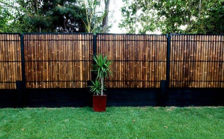 Bamboo Fencing Ideas Ccacademy Make Trendy