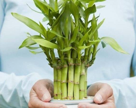 Bamboo Garden Design Ideas Bring Fortune Inside Home