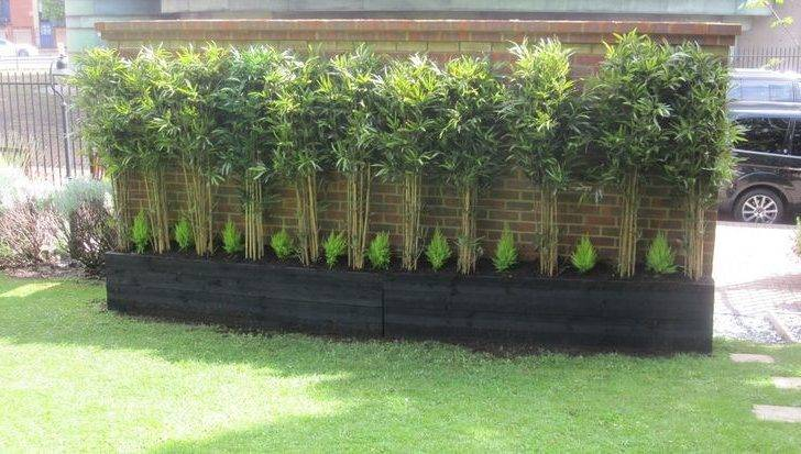 Bamboo Hedge Gallerybespoke Hedges Trees