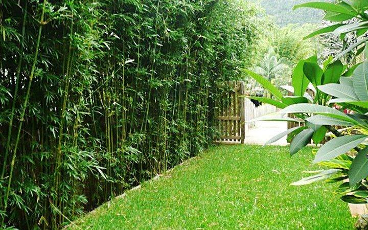 Bamboo Hedge Mike Thinks Would Make Great Sound Barrier