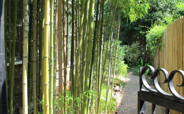 Bamboo Plants Fence Ideas Fencing
