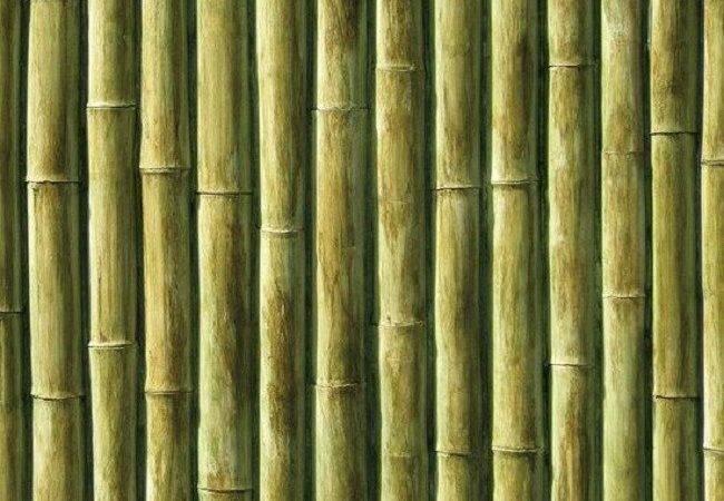 Bamboo Wall Panels Covering
