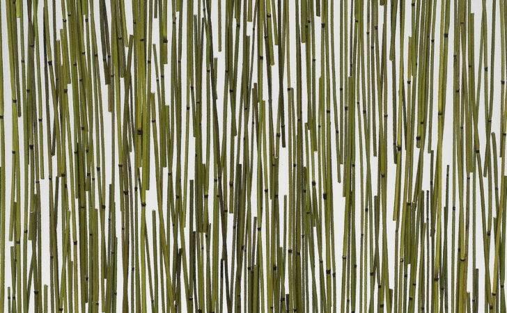 Bamboo Wall Panels Memes