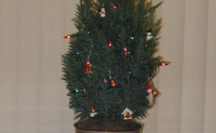 Best European Christmas Trees Inspired