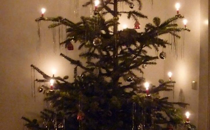 Best European Christmas Trees Santa Workshop