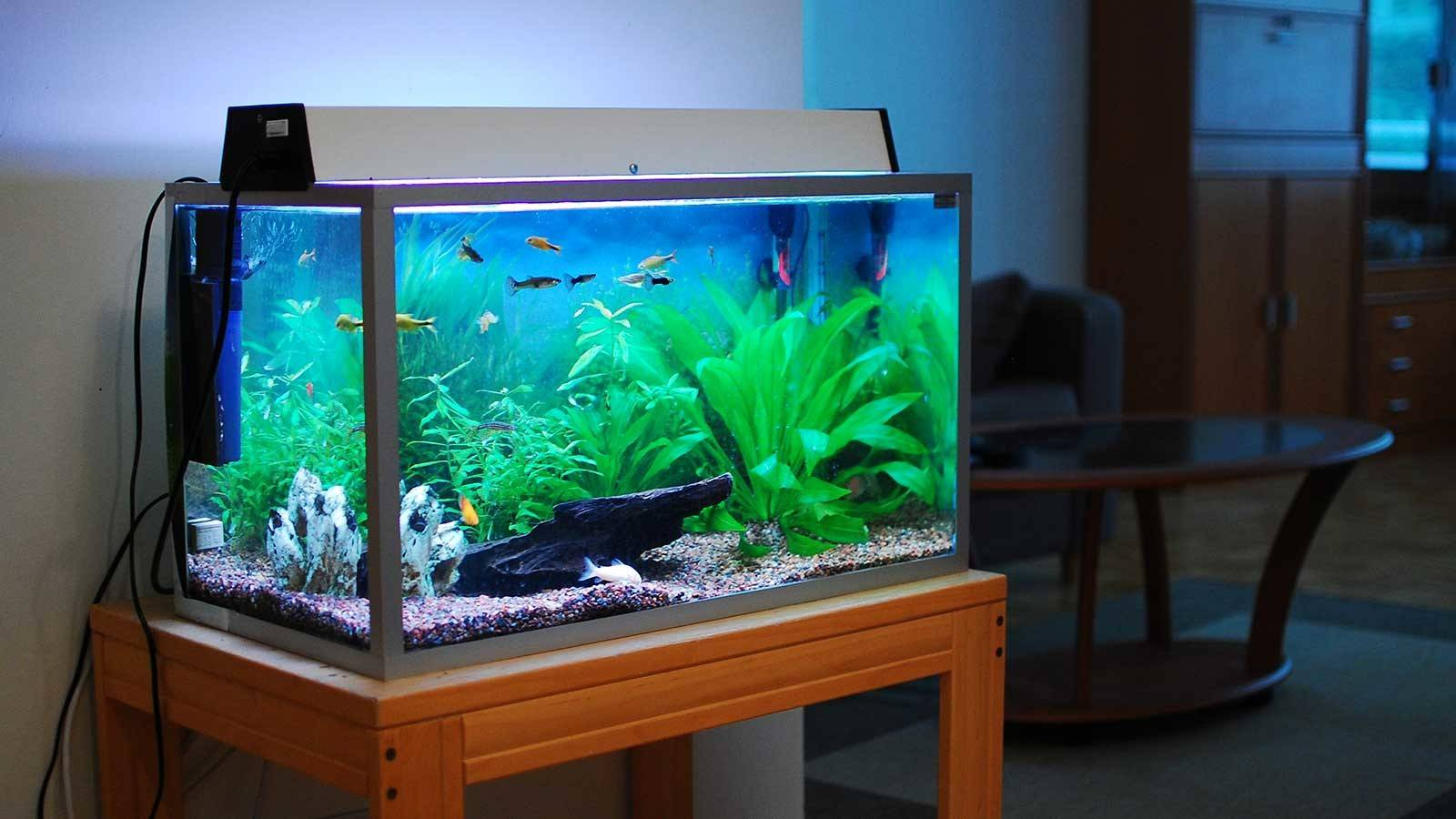 Best Home Aquariums Come Into Water