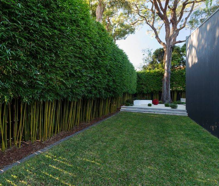 Best Ideas Bamboo Screening Pinterest Garden