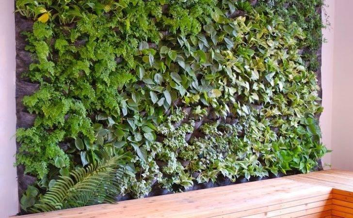 Best Ideas Plant Wall Pinterest Pallet Decor