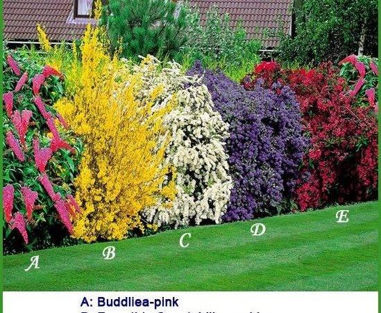 Best Ideas Privacy Plants Pinterest Garden Design