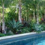 Best Ideas Tropical Pool Landscaping Pinterest