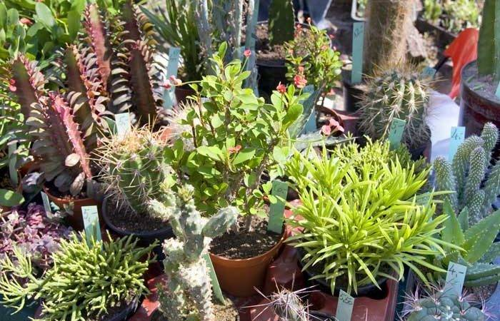 Best Plants Around Swimming Pool
