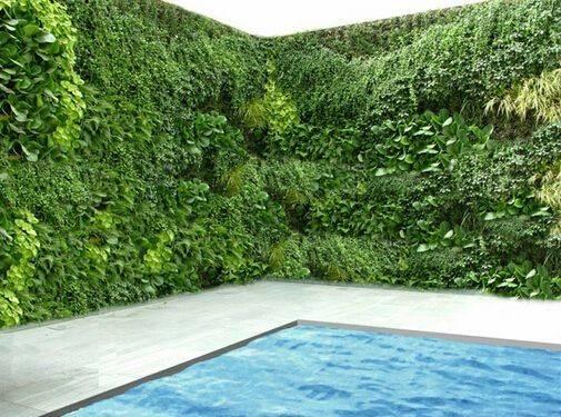 Best Plants Around Swimming Pools Pinterest