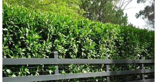Best Plants Privacy Florida Driveway Entrance Ideas