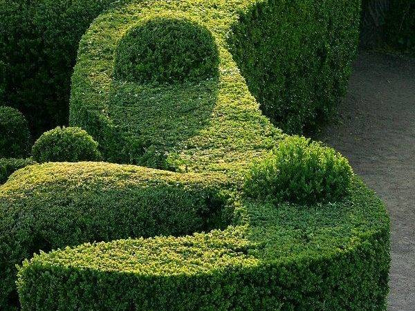 Best Plants Privacy Hedges Related Keywords Suggestions