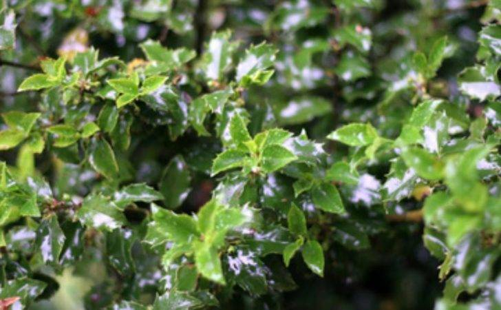 Best Privacy Bushes Shrubs Ehow