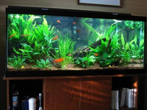 Best Tips Selecting Right Healthy Fish Tank
