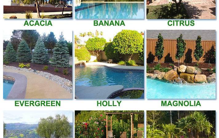 Best Worst Trees Plant Around Pool Intheswim Blog