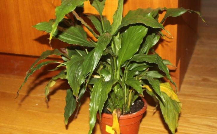 Big Leaf House Plants